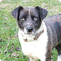 Adopt A Pet :: Ariel - Mocksville, NC