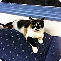 Adopt A Pet :: Cali - Aiken, SC