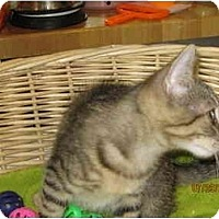 Adopt A Pet :: Tyson - Catasauqua, PA