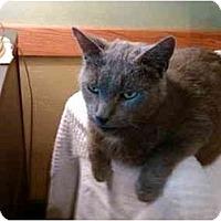 Adopt A Pet :: Noah - Erie, PA