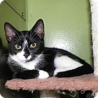 Adopt A Pet :: Moo - Dover, OH