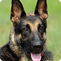 Adopt A Pet :: Tex - Dacula, GA