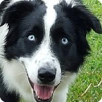 Adopt A Pet :: Zeva - Oliver Springs, TN