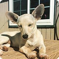 Adopt A Pet :: MARSHMALLOW - Rancho Cucamonga, CA