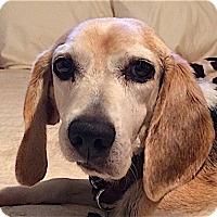 Adopt A Pet :: Bryan - Houston, TX