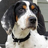 Adopt A Pet :: Woody - Saratoga, NY