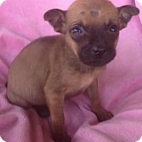 Adopt A Pet :: Gianna - Hagerstown, MD