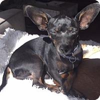 Adopt A Pet :: Chirpper - San Diego, CA