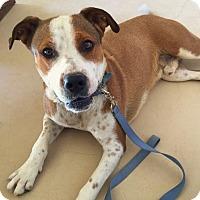 Adopt A Pet :: Jack - Wickenburg, AZ