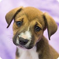 Adopt A Pet :: Natalie - Houston, TX