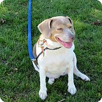 Adopt A Pet :: Dixie - Kalamazoo, MI