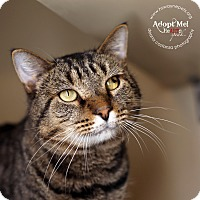 Adopt A Pet :: Butch - Lyons, NY