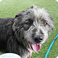 Adopt A Pet :: Molly Mae - white settlment, TX