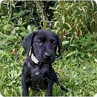 Adopt A Pet :: Jade - Newport, VT