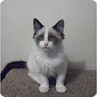 Adopt A Pet :: Scout - Modesto, CA