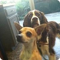 Adopt A Pet :: ENRIQUE - Raleigh, NC