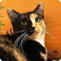 Adopt A Pet :: Ali - Albany, NY