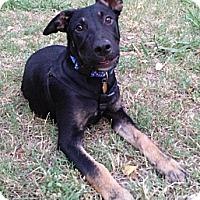 Adopt A Pet :: Briar - Sacramento, CA