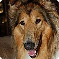Adopt A Pet :: cassidy aka Cassie - Pueblo West, CO