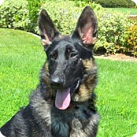 Adopt A Pet :: Kai - San Diego, CA