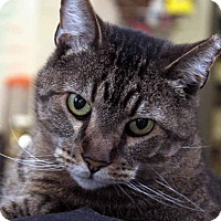 Adopt A Pet :: Merlin - Anderson, IN