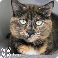 Adopt A Pet :: Tessa - Merrifield, VA