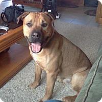 Adopt A Pet :: Potsy - Greeley, CO