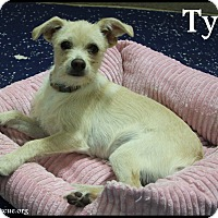 Adopt A Pet :: Tyler - Rockwall, TX