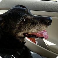 Adopt A Pet :: Daisy - Pinellas Park, FL