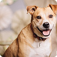 Adopt A Pet :: Leroy Brown - Portland, OR