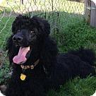 Adopt A Pet :: Tango of Raleigh