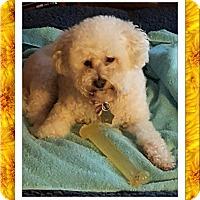 Adopt A Pet :: Adopted!!Heidi - WI - Tulsa, OK