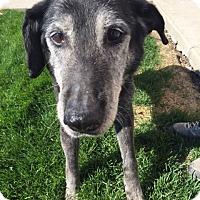 Adopt A Pet :: Lily - Logan, UT