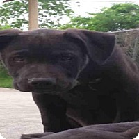 Adopt A Pet :: A379383 - San Antonio, TX