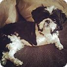 Adopt A Pet :: Adopted! Trina