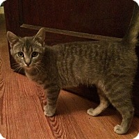 Adopt A Pet :: Alice - Brattleboro, VT