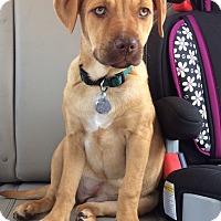 Adopt A Pet :: Molly - Greensboro, GA