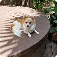 Adopt A Pet :: Tahoe - conroe, TX