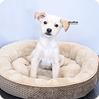 Adopt A Pet :: Buffy - Atlanta, GA