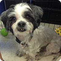 Adopt A Pet :: Eddie - Gilbert, AZ