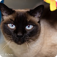 Adopt A Pet :: Matta - Colorado Springs, CO