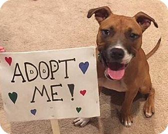 Boxer Mix Dog for adoption in Livonia, Michigan - Alice