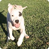 Adopt A Pet :: Derby - Henderson, NV