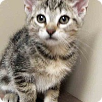 Adopt A Pet :: ADOPTED!!!   Erica - Oswego, IL