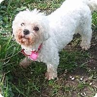 Adopt A Pet :: Serena - Mukwonago, WI