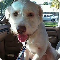 Adopt A Pet :: Sharkey - Key Largo, FL