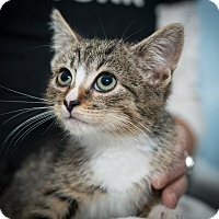 Adopt A Pet :: Xavier - New York, NY