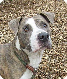 Terrier (Unknown Type, Medium) Mix Dog for adoption in Flint, Michigan - Dinky