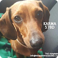 Adopt A Pet :: Karma - Spring, TX