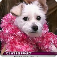 Adopt A Pet :: Leilani - VIDEO! - Los Angeles, CA